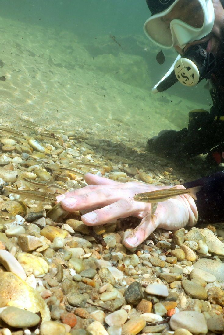 Southern France: Best of Mediterranean diving • Mares ...  |Scuba South France