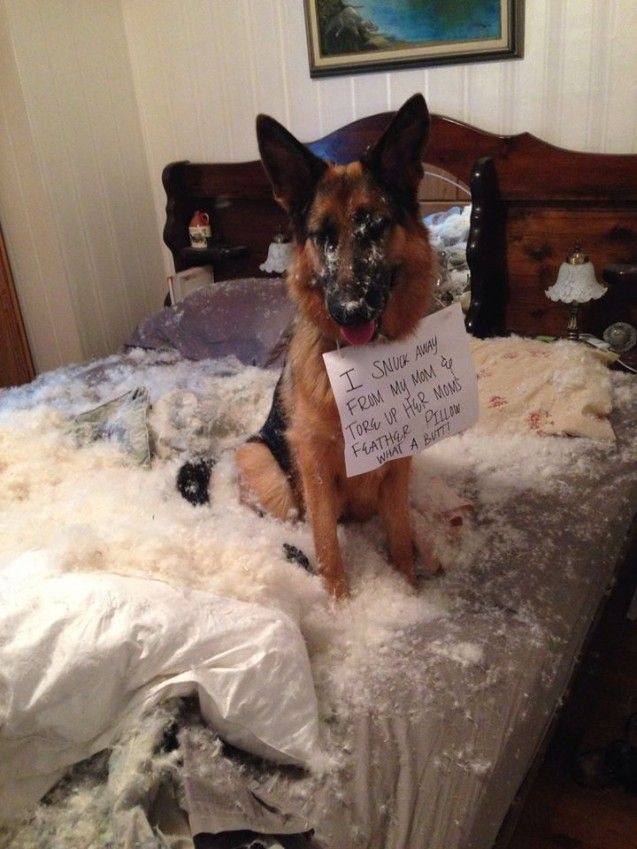 38 Of The Naughtiest Dogs Of The Planet You Ll Laugh Hard