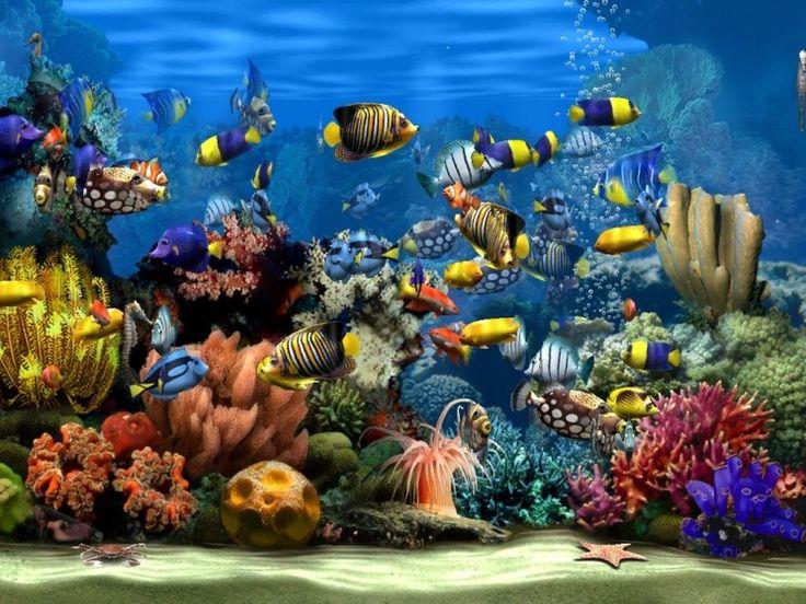Living marine aquarium 2 screensaver living marine for Aquarium katalog