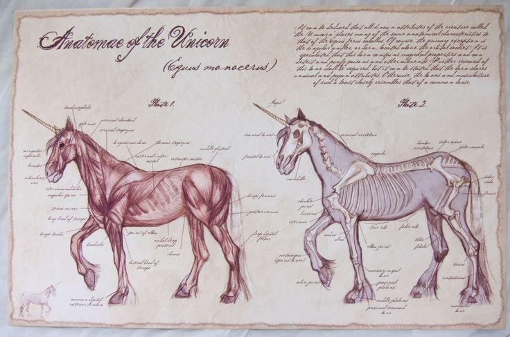 Anatomie Unicorn- 11x17 Umělecká reprodukce od trapné náklonnosti na Storenvy