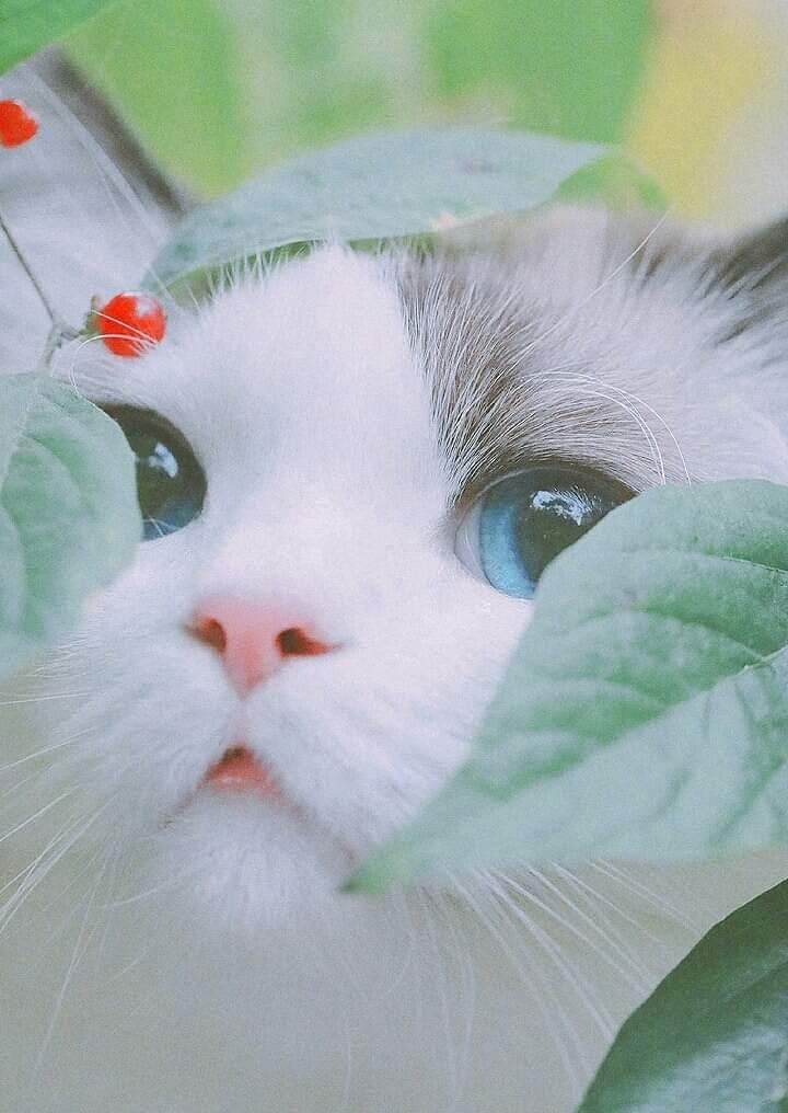 архивах уникальные картинки привет котята команда