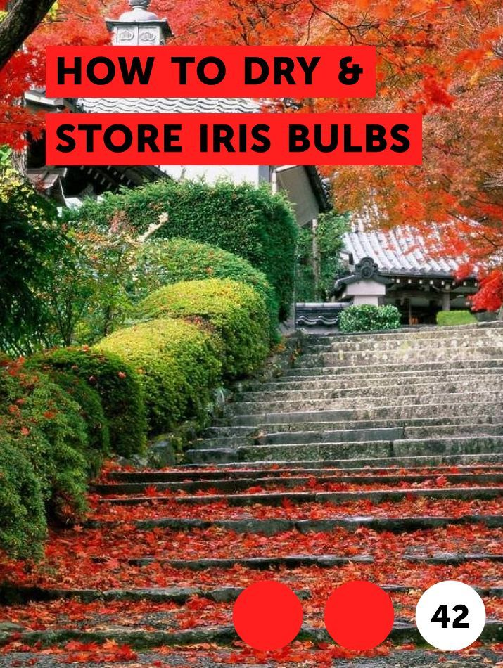 Learn How To Dry Store Iris Bulbs How To Guides Tips And Tricks Yew Shrub Citrus Trees Growing Plants