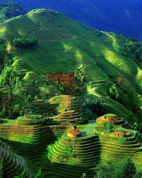 Rice fields China
