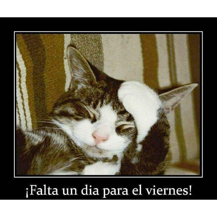 Buenos días feliz #jueves para tod@s  #gato #gatos #gatito #gatitos #cat #cats  #nice #funny #gracioso #love #amor #amigos #friends  by almudena1525