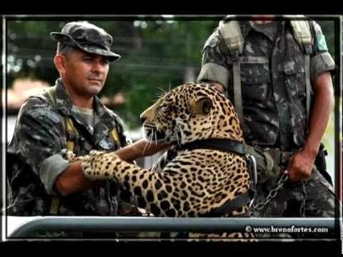 Oração do Guerreiro da Selva - Exército Brasileiro | Letras.mus.br