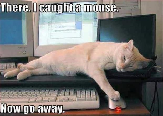 Ha ha ha! Reminds of Bailey and the time she came downstairs all proud of herself, tail held high, and purring because she had caught a mouse...in a mousetrap. Ha ha ha!