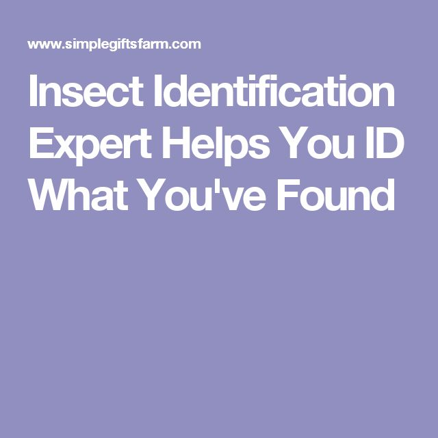 Insect Identification Expert Helps You ID What You've Found