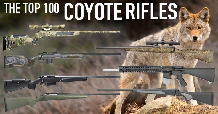 Looking for the perfect coyote hunting rifle? This article dives into the many predator guns and varmint calibers on the market today.