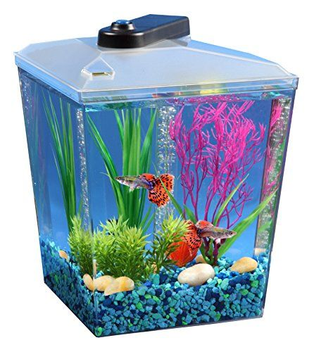 1000 ideas about corner aquarium on pinterest fish for Amazon fish tank filter