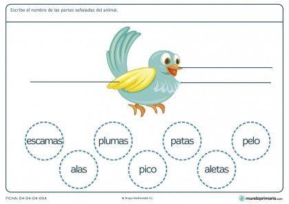 Ficha de las partes del pájaro para primaria