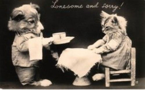 Intensely Creepy Cat Portraits from the 1900s