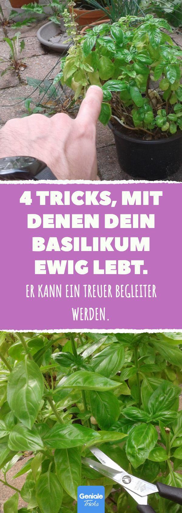 4 Tricks, mit denen dein Basilikum ewig lebt. #kü…