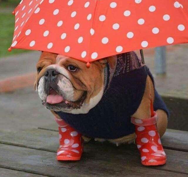Ready for Rain :)