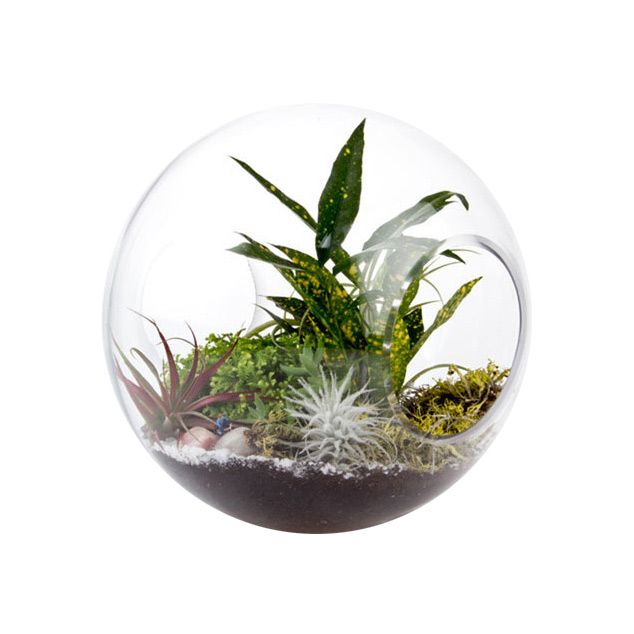 Two large circular openings create a wind tunnel through this oversized terrarium sphere, creating easy access for hands of all ages and genders. Perfect as an accent to help brighten a room, while als... Find the Open-Faced Terrarium, as seen in the 3 Principles of Organic Modern Design Collection at http://dotandbo.com/collections/3-principles-of-organic-modern-design?utm_source=pinterest&utm_medium=organic&db_sku=91740