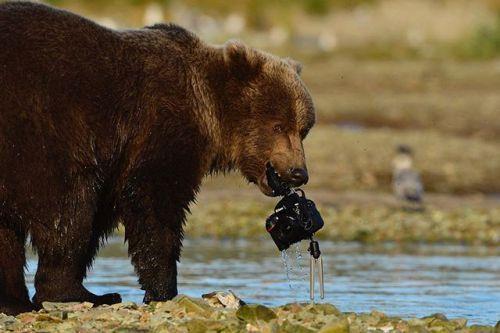 I AM 100 100 Jahre Nikon - 100 Stories rund um Nikon Fotografen ihr Equipment und die Abenteuer die sie damit erlebt haben. Einige davon stellen wir Euch in den nächsten Wochen hier vor - taucht mir uns ein in 100 Jahre Nikon Stories. Foto: David Bittner An einem schönen Nachmittag im Spätsommer in der Wildnis Alaskas installierte ich eine #NikonD800E mit 28/1424 mm und Pocket-Wizard-Remote-Auslöser an einer Stelle wo Balu ein Bär den ich seit vielen Jahren oft für längere Zeit an diesem…