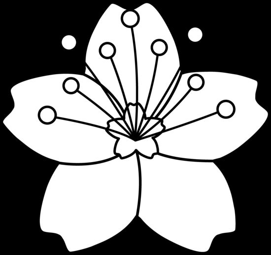 Cherry Blossom Line Art Free Clip Art Jewelry