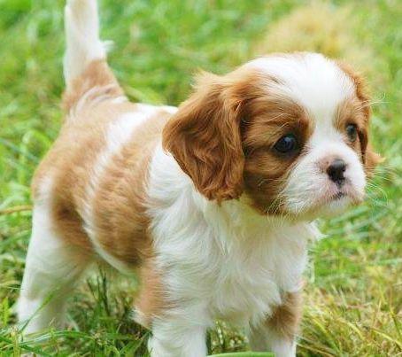 .Just Puppy Stinken Cute<3