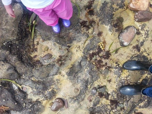 Family outing - exploring rock pools. Lots of fun ideas for rock pool inspired play at home too! via Octavia and Vicky
