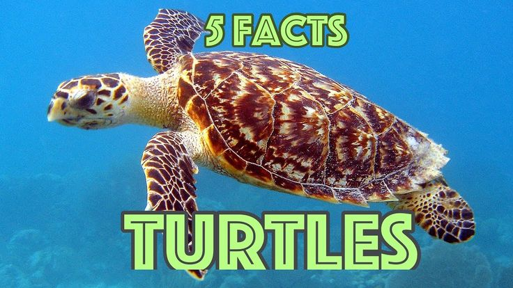 5 Facts About Turtles, For Kids - Turtle Facts