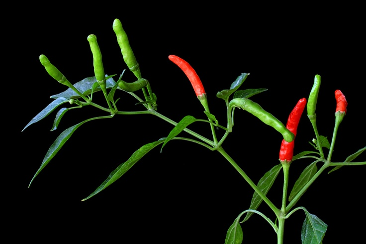 Red & Green by Vendenis ., via 500px