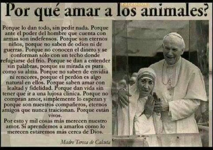 No desvelo ningún secreto si digo que la madre Teresa de Calcuta fue una mujer maravillosa. Pero, ¿habéis leído alguna vez lo que dijo sobre por qué debemos amar a los animales? Podéis verlo aquí, es precioso.
