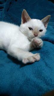 Gânduri Între Rânduri: Cel mai iubit dintre pisicei