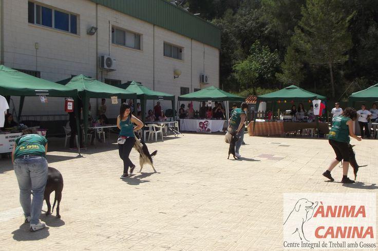 #exhibicioncanina #dogdancing #feriaadopciones +somnianimal #colaborandoconprotectoras