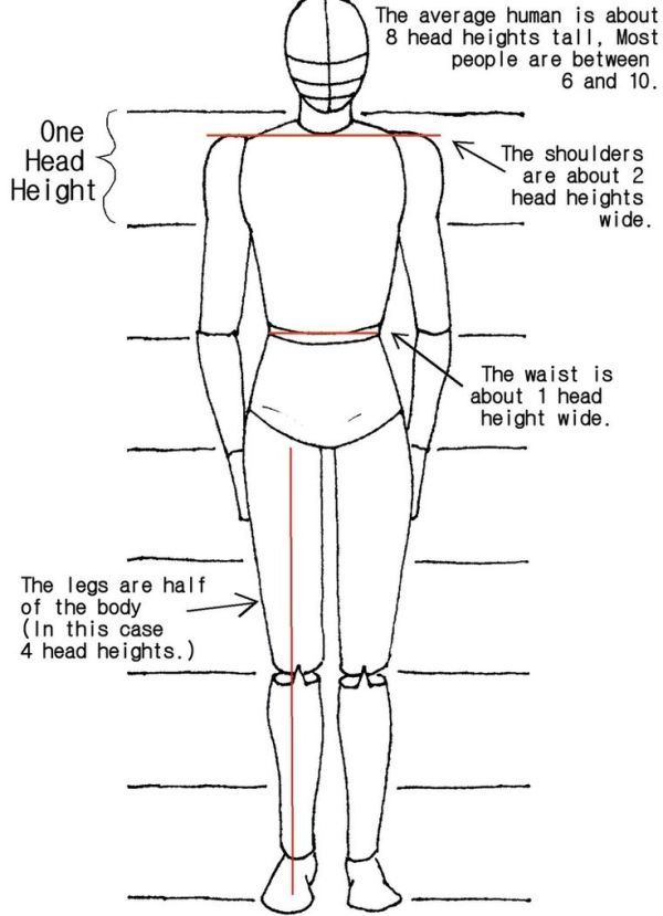proportions for drawing human body by Dawn.C