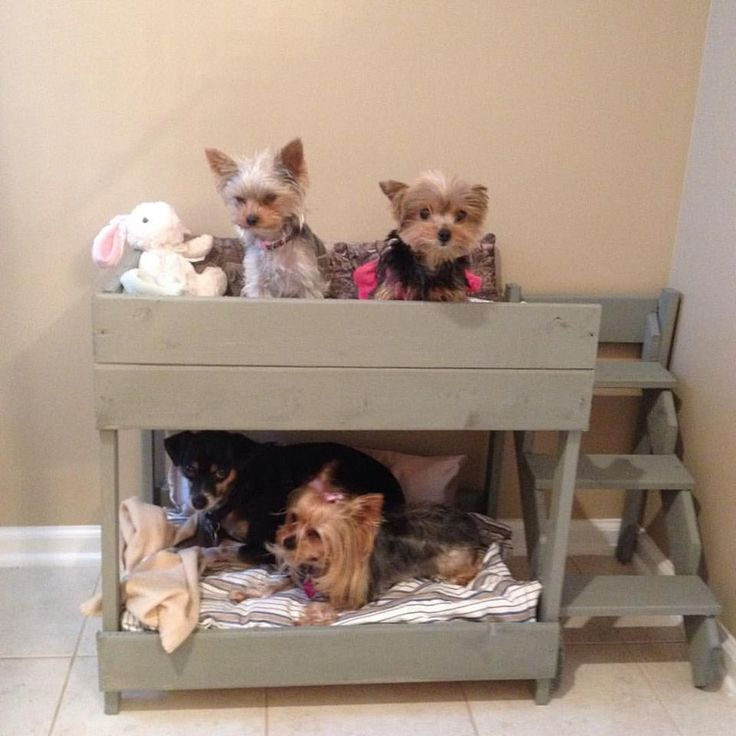 Super easy bunk bed for the pups. Two feet long, 16 inches deep. Big enough for 4 little dogs. Made out of 3 1x1s, 3 1x2s, and 2 pieces of luan. Cost around $20.00 Folded blankets are used for mattress, but standard pillows fit perfectly.