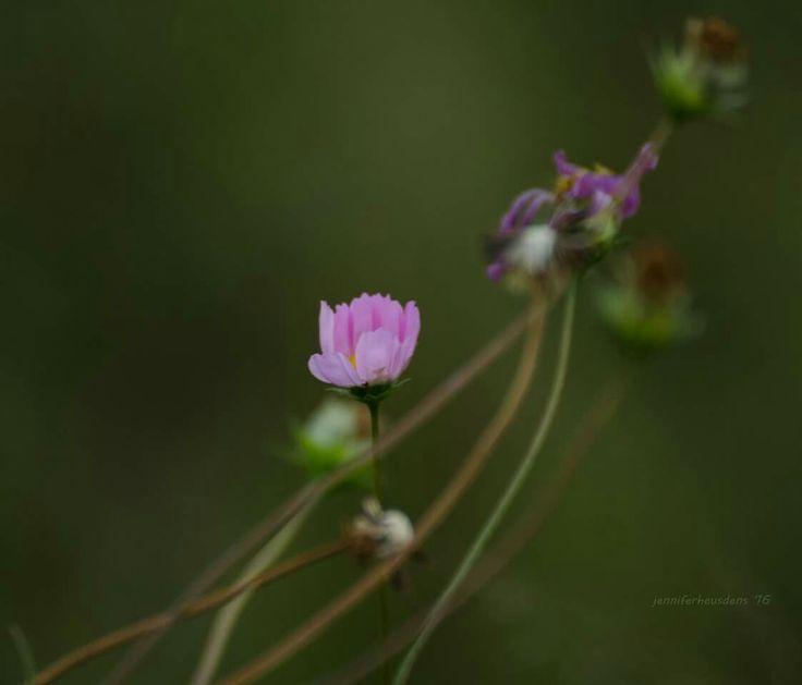 Waiting for sunrise  Flowers on a farm Photography