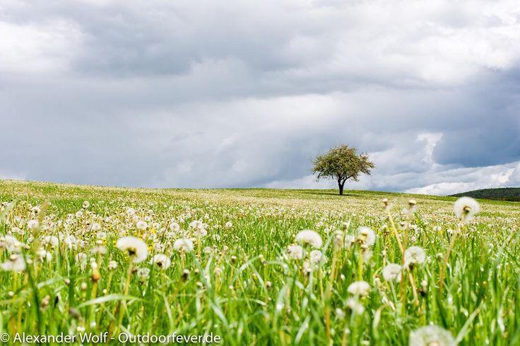 Rechtenbach - Zwiefalten #hiking #swabianalps #welcometonature #wanderlust #travelphotography #myphotography #journey #travel #naturephotography #nature #photography #photooftheday #outdoorphotography #landscape #landscapephotography #outdoors #nikondeutschland #nikontop #nikond7200 #Nikon #nikonartists  @nikontop @nikondeutschland