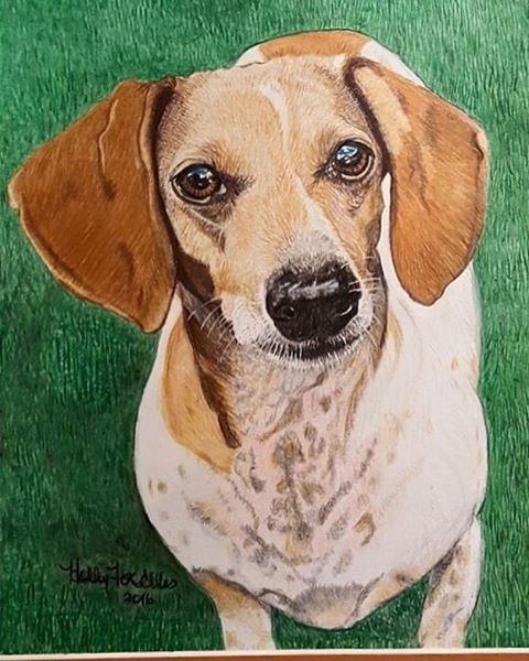 This is our boy Reid, drawn by the incredibly talented @hollyfoxellis . #rescuedachshund #adoptdontshop #rescuedachshunds #dachshund #rescuedog #coloredpencils