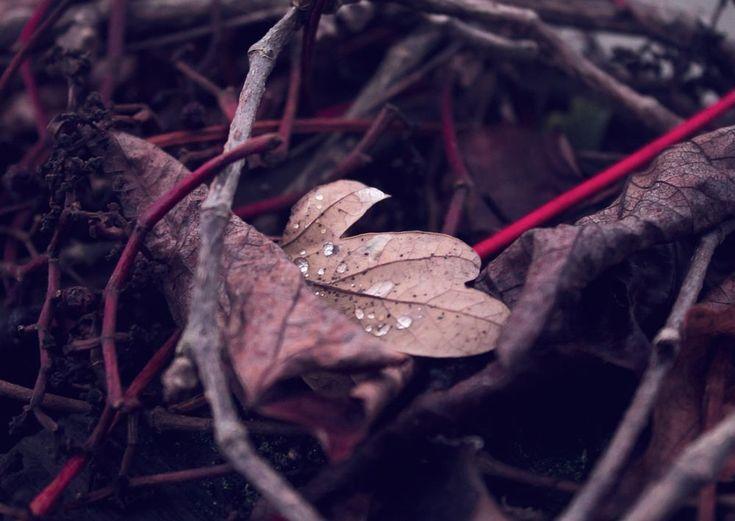 Autumn Leaf by Nikolaj Reimer Hansen