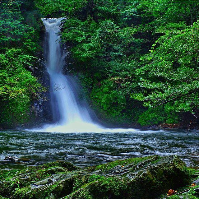 【y.hamaah】さんのInstagramをピンしています。 《新庄不動滝(男滝)  物凄い水量でした。 #岡山 #新庄不動滝 #滝  #水  #木  #緑  #森林  #スローシャッター  #自然  #苔  #waterfall  #water #tree  #green  #nature  #japan》