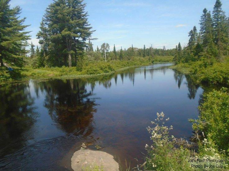 Summer Beauty on the Seguin River off South seguin estates Road in seguin Township