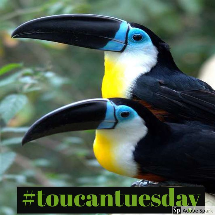 Who can? Toucan ... tuesday.