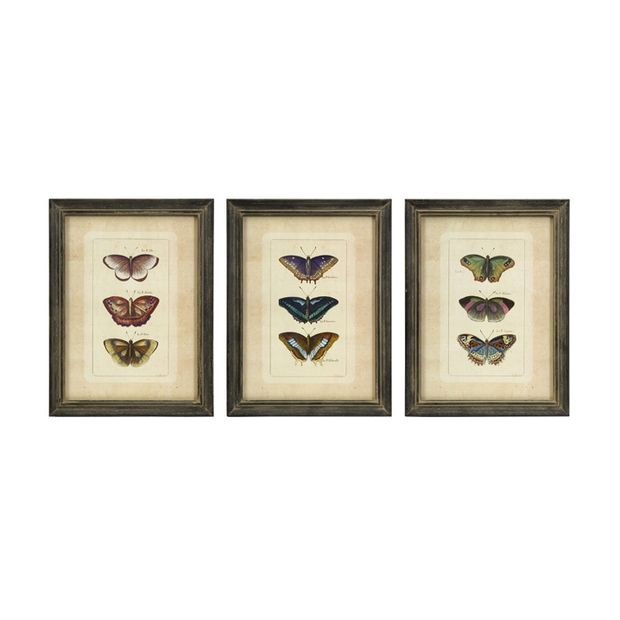 Butterfly Anatomy Framed Art - Set of 3