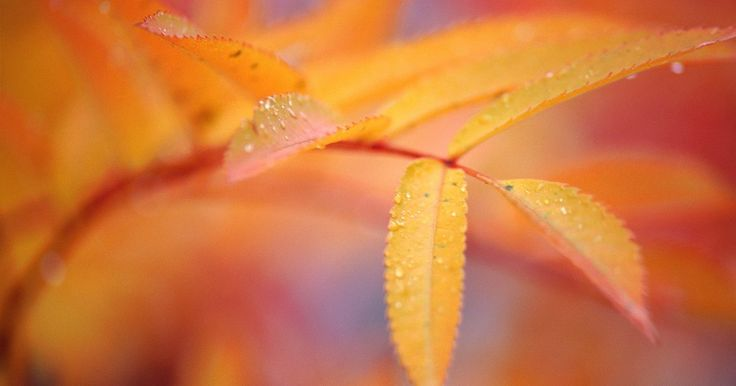 Ideias de atividades com folhas do outono para Educação Infantil. Atividades artísticas com as folhas do outono são boas para oferecer uma maneira de as crianças aprenderem sobre as mudanças na folhagem das árvores durante o outono, ao mesmo tempo em que desenvolvem as habilidades motoras necessárias, como cortar, desenhar e colar. Os artesanatos com folhas podem ser combinados com uma caminhada na natureza ...