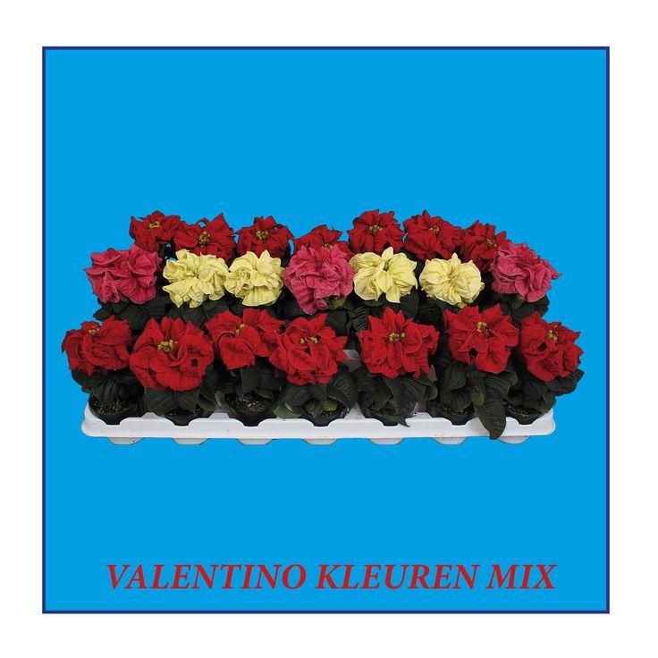 Valentino mixed colors