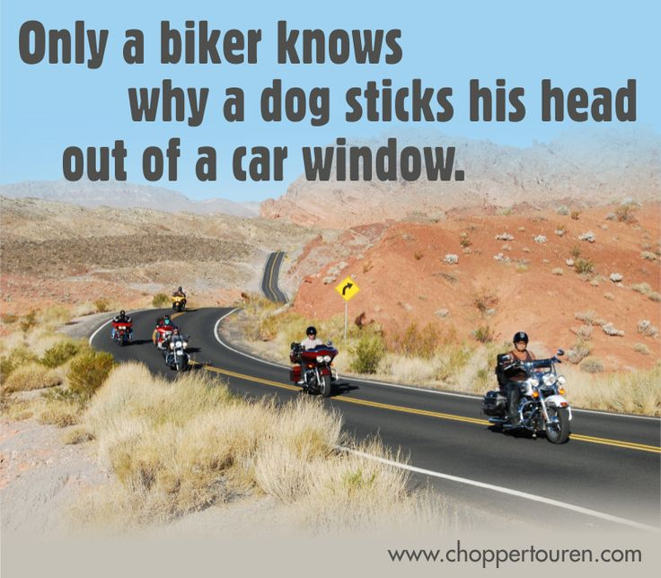 Only a biker knows why a dog sticks his head out of a car window. :-)