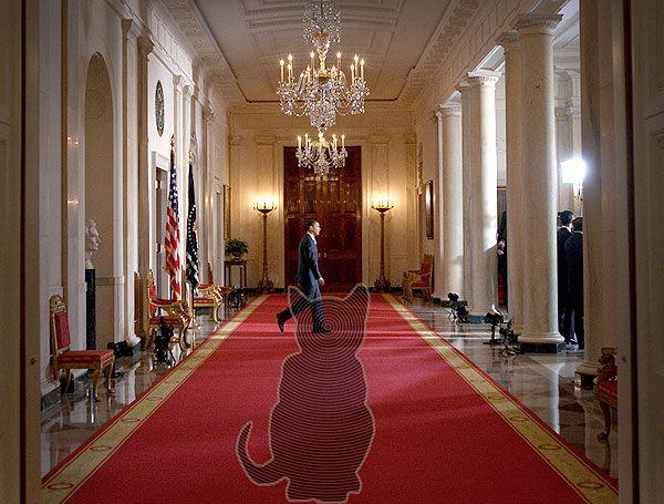 Has President Obama seen the Demon Cat? Photo illustration by Paul M. Davis