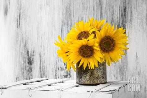 Background Still Life Flower Sunflower Wooden White Vintage Premium Poster