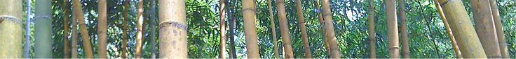 Bamboo Farming USA - Why Farm Bamboo http://www.bamboofarmingusa.com/