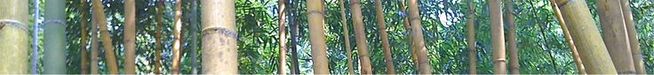 Bamboo Farming USA - Why Farm Bamboo