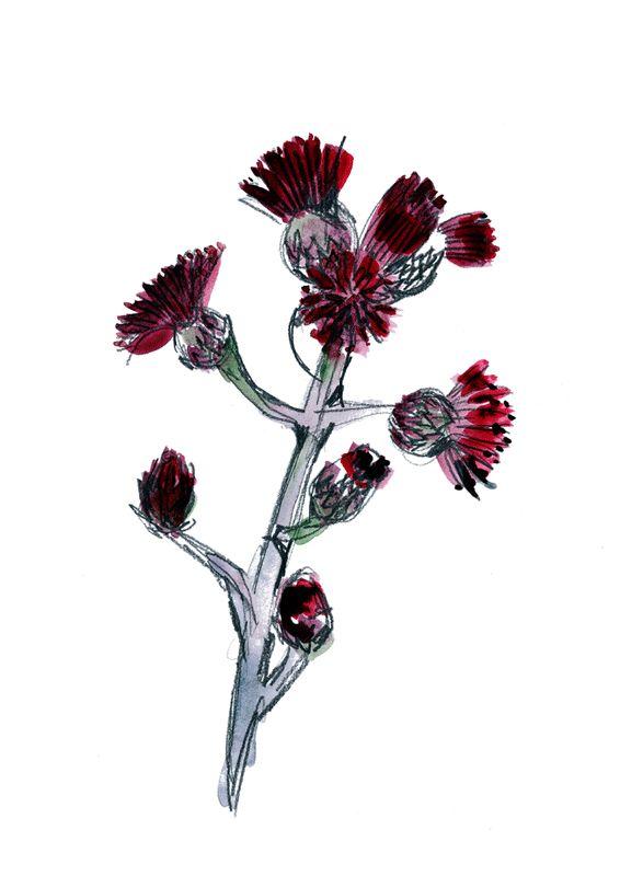Flora - IMERNST