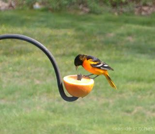 baltimore oriole.  good idea-put cut fruit on end of shepard's hook....