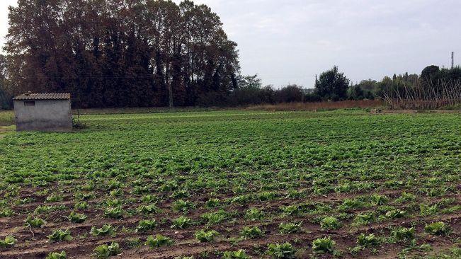 Els terrenys de les hortes on s'aplicarà el mètode de les feromones i la tanca electrificada. / AJ. DE SALT.