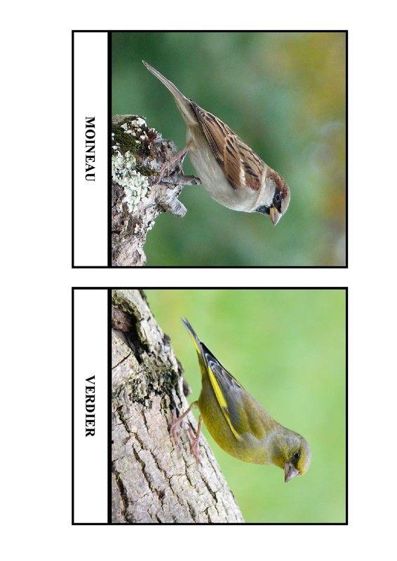 Imagier des oiseaux de chez nous - Page 3