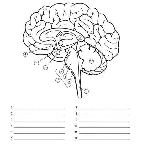 Image result for blank brain diagrams to fill in | School ...