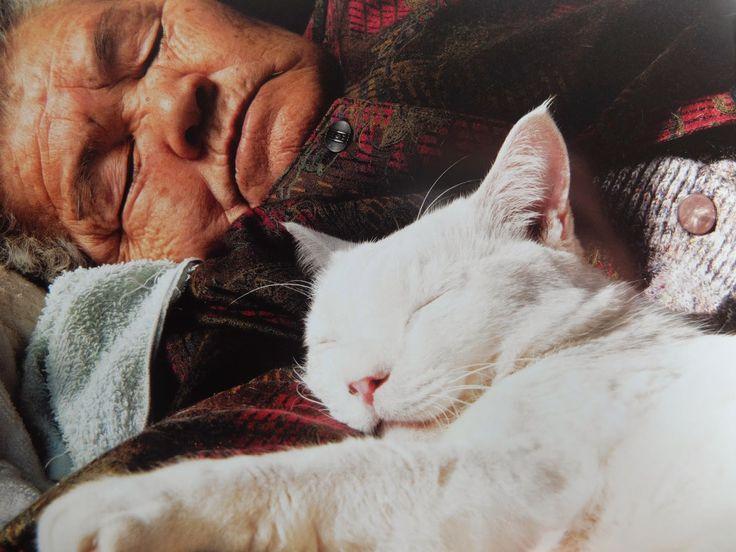 cat Misao and fukumaru
